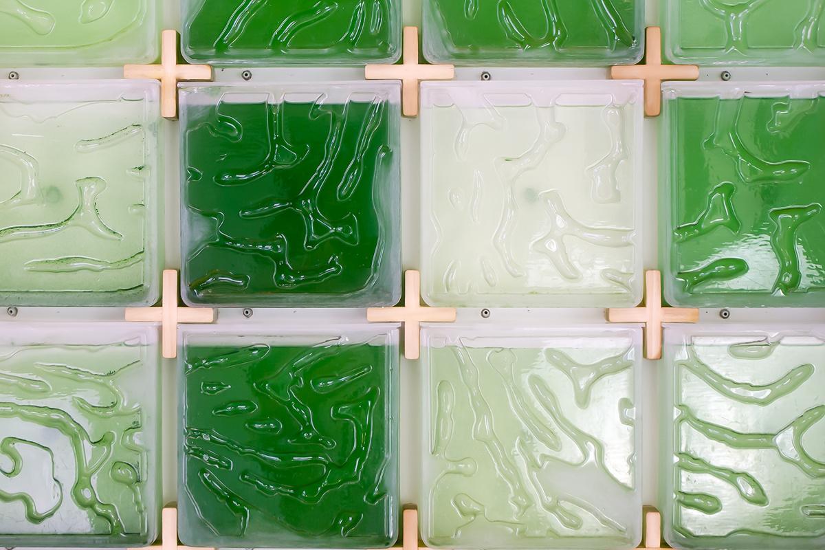 Hyunseok An. Микроферма водорослей