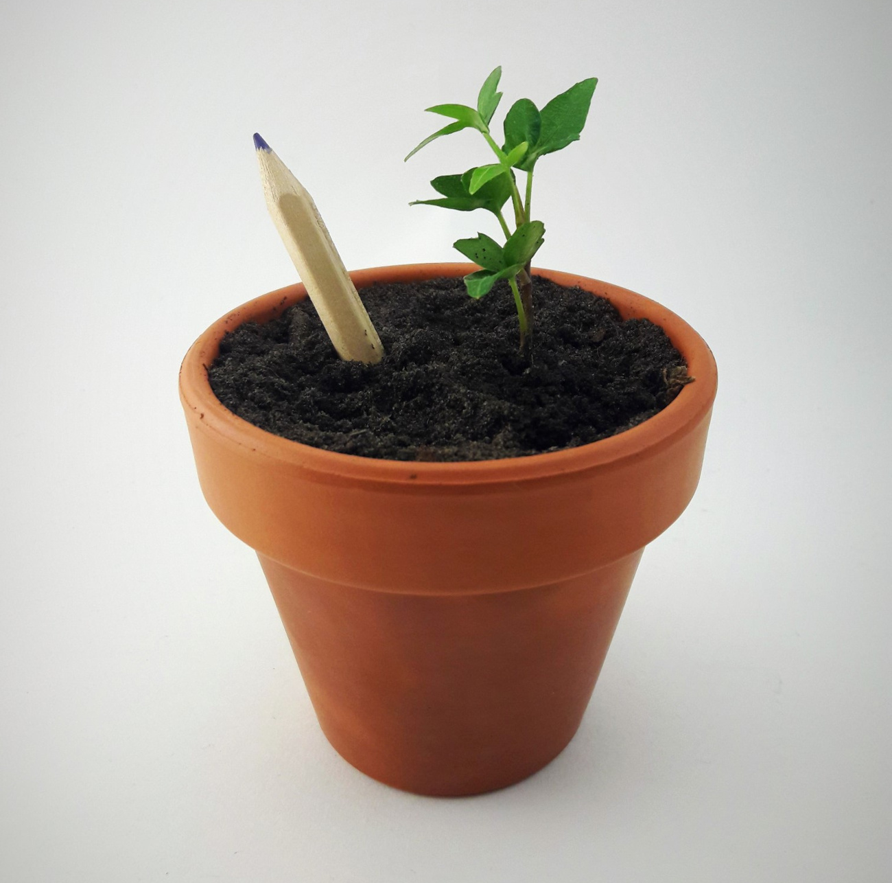 Eco Stick (Украина). Карандаши с семенами